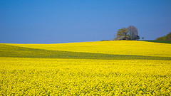 Yellow Wave, by Flickr user 8#X